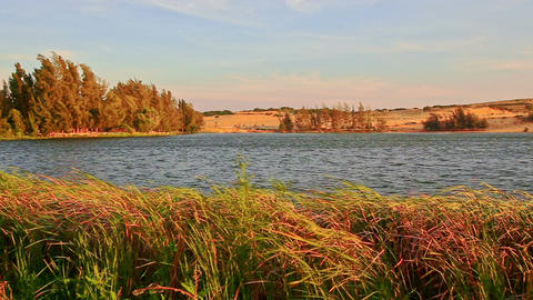 Wind Shakes High Grass at Lake Bank against Forest by Sand Dunes Footage