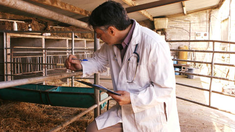Veterinary physician noting on a clipboard Live Action