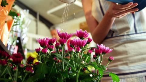 Florist watering flowers in flower shop Footage