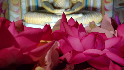 Pink lotus flowers offering to the statue of meditating Buddha. Sri Lanka Footage