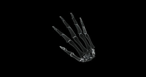 Screen 3d of bone structure in human hand in the human body - loop Animation