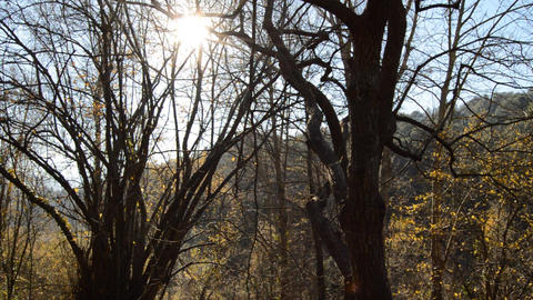 Sunny Evening in the Cold Forest Footage