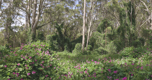 Flowers in bloom in Margaret River and Naturaliste, Western Australia Tourism Live Action