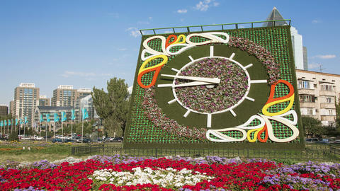 Flower Clock Time Lapse Animation