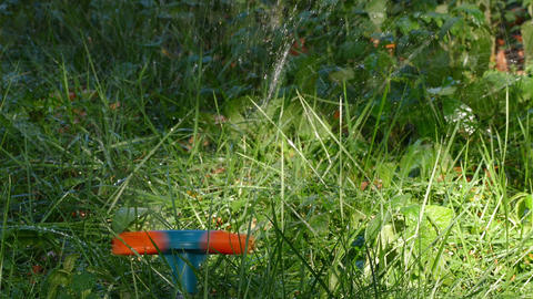Automatic Sprinkler Watering Grass Footage