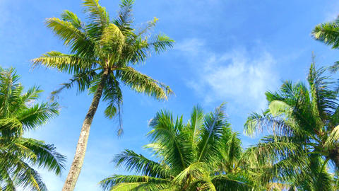 Tropical sky where palm trees sway in the wind Footage