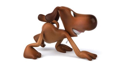dog walk HD Stock Video Footage