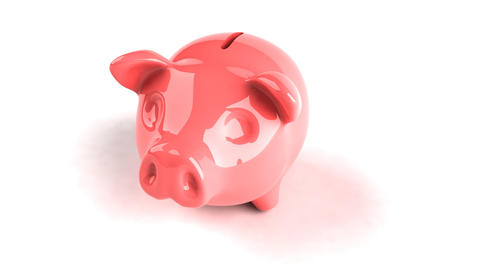 Pig stock footage