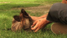 (1111) Young Couple Playing with Puppy in the Park Stock Video Footage