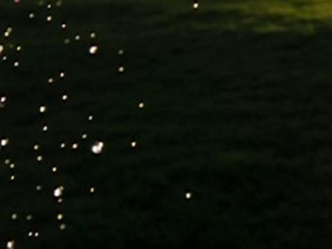 Balloon Explosion Pink 01 50% Stock Video Footage