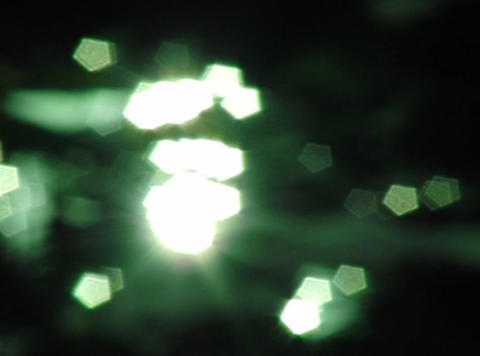 Lotus Leaves 05 Loop Stock Video Footage