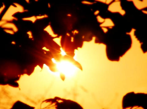 Sunset Leaves 02 Loop Stock Video Footage