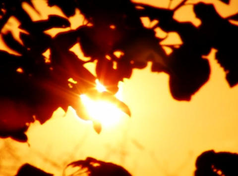 Sunset Leaves 02 Loop Stock Video Footage