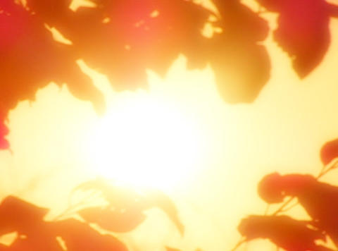 Sunset Leaves 04 Loop Stock Video Footage