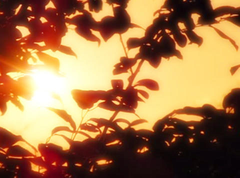 Sunset Leaves 06 Loop Stock Video Footage