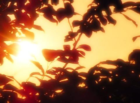 Sunset Leaves 06 Loop Stock Video Footage