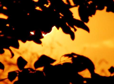 Sunset Leaves 08 Loop Stock Video Footage
