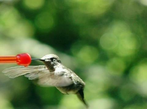 Off you go humming bird Footage