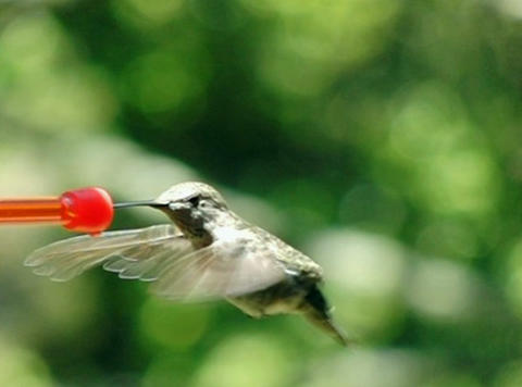 Off you go humming bird Stock Video Footage