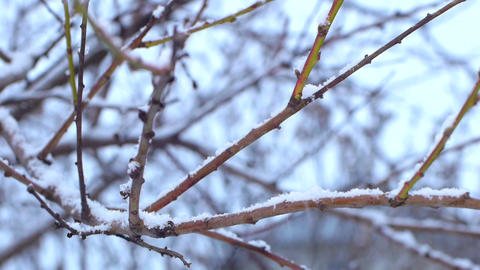 Tree branch in a snowy day Footage