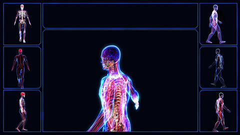 Anatomy of the human body Stock Video Footage