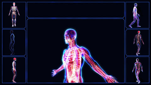 Anatomy Of The Human Body stock footage