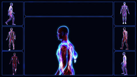 Muscular system Stock Video Footage