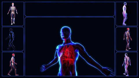 Respiratory system Animation
