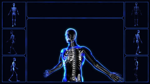 Human skeleton Animation