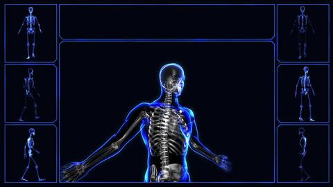 Human skeleton Stock Video Footage