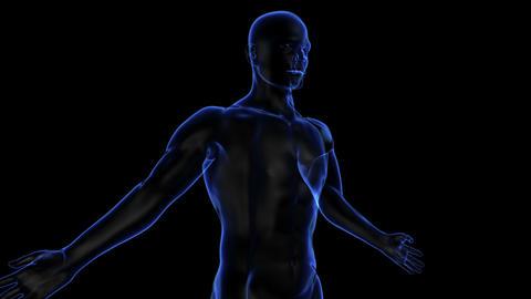 Human body Stock Video Footage