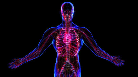 Circulatory System Stock Video Footage