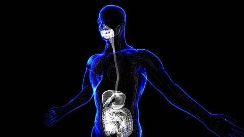 Digestive System Stock Video Footage