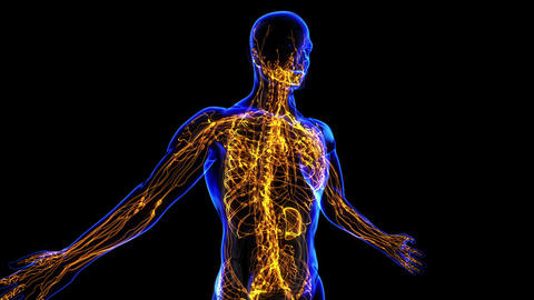 Lymphatic System Stock Video Footage