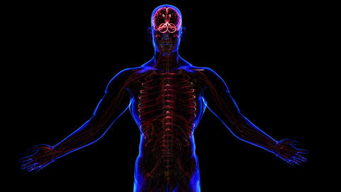 Nervous system Stock Video Footage