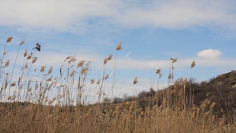 landscape with clouds and reed Stock Video Footage