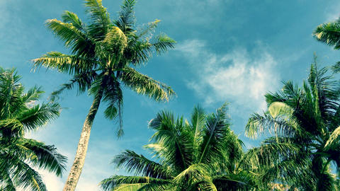 Tropical sky and palm tree, memory of vintage color Footage