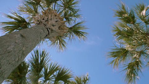 Looking Up to Clear Blue Sky Against Palm Trees, 4K Stock Video Footage