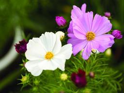 close-up of flower 相片