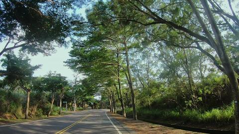 Taiwan, mountain, tree shade, tree shade road, bicycle lane Live Action