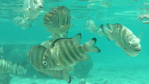 HD video,Lots of fish swimming underwater Footage