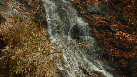 Tilt Up Natural Waterfall Surrounded by Fall Leaves Footage