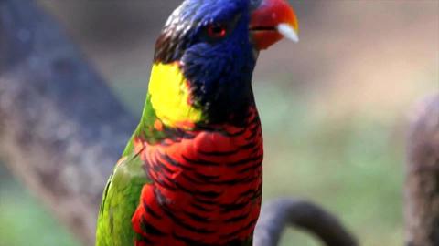 Mind blowing animals - birds from Bird Park Footage