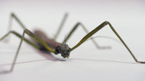 16 Studio Shot Of Walking Stick Or Insect Or Arthropod Live Action
