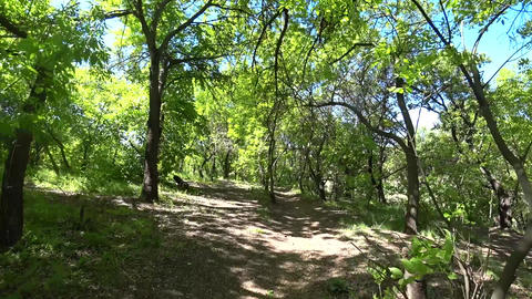 Personal Perspective, POV of Hiker Walking on a Path Through Green Forest at Sunny Summer Day Live Action