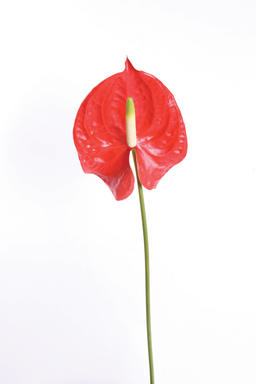 beautiful flower フォト