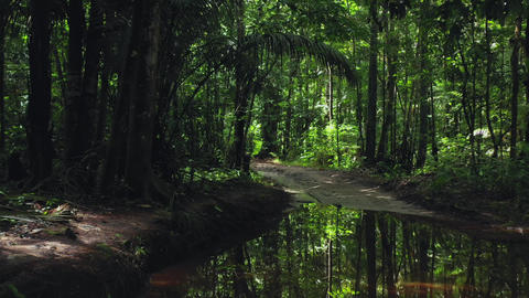 Dirt track road through jungle rainforest, logging timber infrastructure Live Action