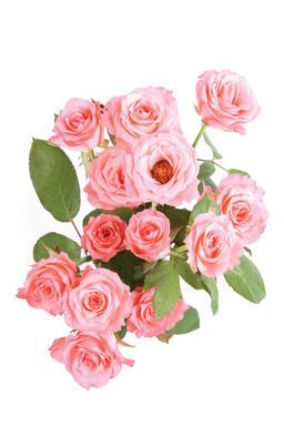beautiful flower Foto