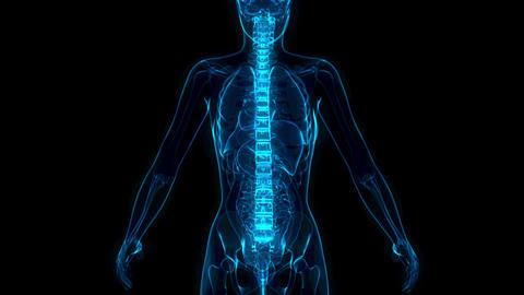 cg healthcare 3D animation, spine on xray body - human body Animation