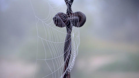 Spiderweb covered morning dew on summer morning close up Live Action